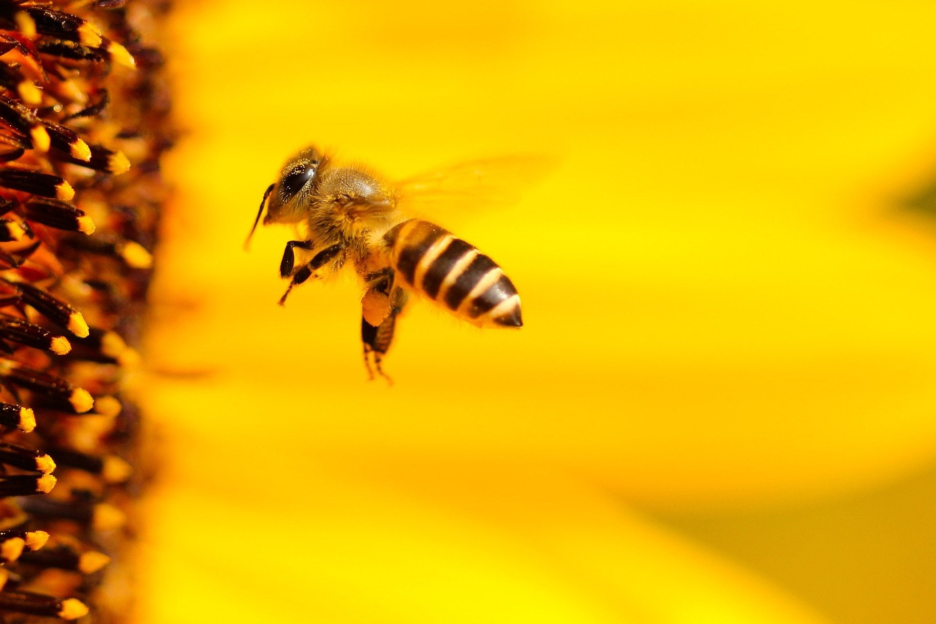 Encourage bees back into your garden