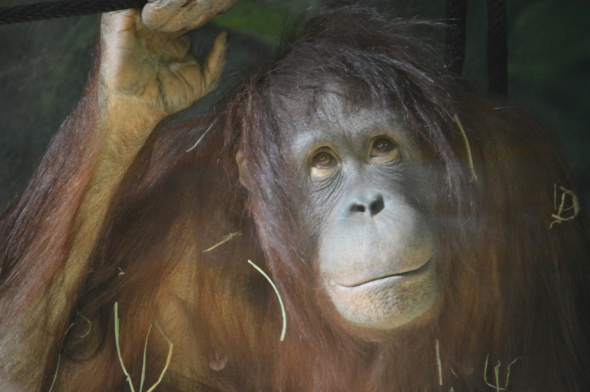The importance of buying palm oil free