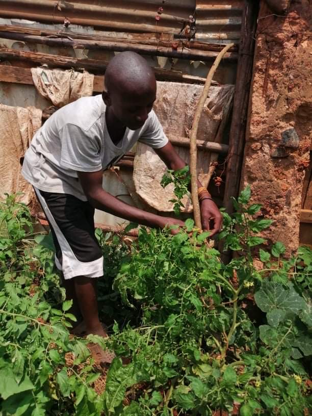 Permaculture in practice: A look at the Peace December Uganda project