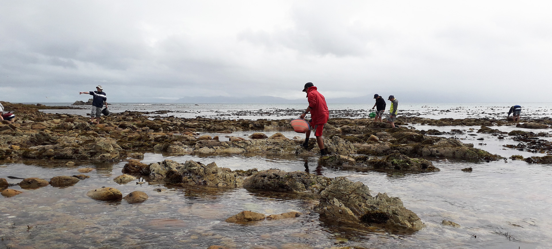 Coastal Foraging – An Unforgettable Experience