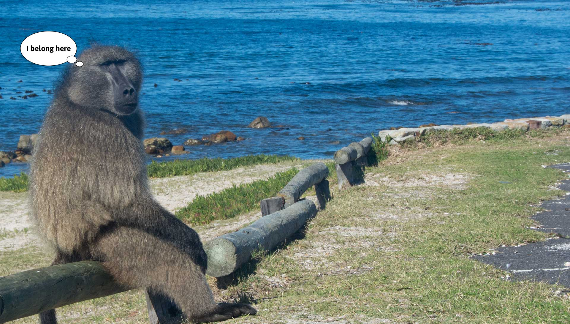 Let's stop the cruel management of baboons in the Western Cape